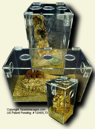 Captive Bred Tarantulas For Sale, Acrylic Cages for Tarantulas, Pet ...